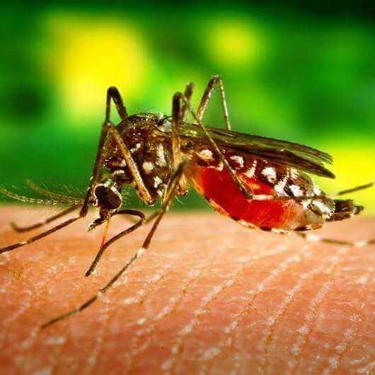ריסוס/הדברת יתושים, הדברה ירוקה.