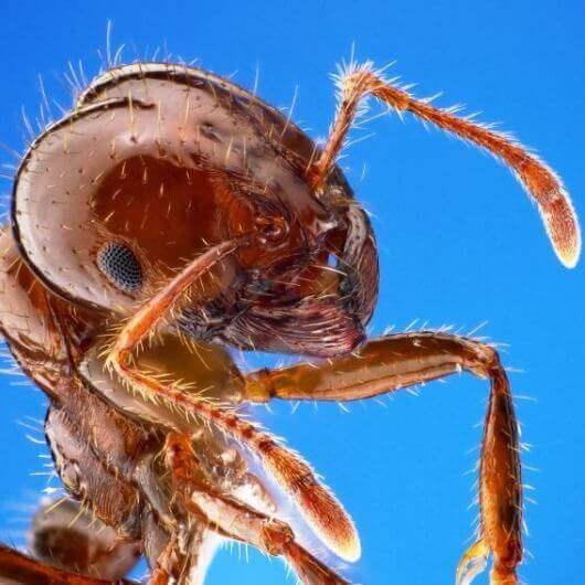 הדברת מזיקים ביו באג מומחה הדברת נמלים