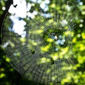 עכבישים, הדברה ירוקה.
