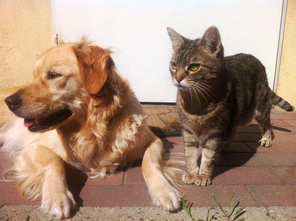 ביו באג הדברה בבית עם בעלי חיים